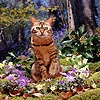 Bengal cat among woodland flowers