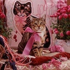 Tabby cat in pink ribbon