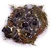 Great Tit nest, Day