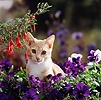Kitten among pansies