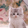 Portrait of fluffy kitten