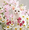 White kitten and pink flowers