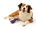 Dog with bandaged leg