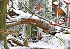 Woodland in winter jigsaw