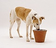 Dog eating from a raised bowl