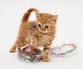 Red tabby kitten with tinsel