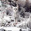 Silver kitten on snowy rockery