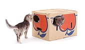 Cardboard box with holes for kittens to play in