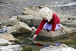 Little girl dibbling in a rock-pool at Kimmeridge