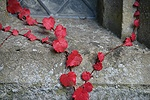 Autumnal Boston Ivy on a wall