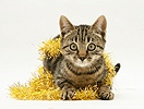 Brown tabby kitten with gold tinsel