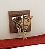 Bengal cat coming through a propped open cat flap