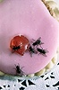 Common House Flies on a cake