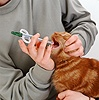 Giving tablet to an adult ginger cat using a pill giver