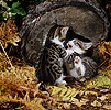 Kittens playing by a log