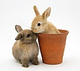 Baby rabbit in an earthenware flowerpot