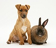 Puppy with dwarf Rex rabbit