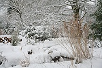 Garden buried in midwinter snow