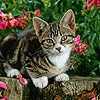 Tabby kitten in the garden