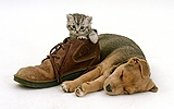 Puppy sleeping beside silver tabby kitten in a shoe