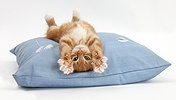 Ginger kitten stretching out upside down on a cushion