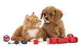 Cavapoo pup and ginger kitten with festive toys