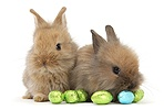 Two baby Lionhead-cross rabbits with Easter eggs
