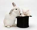 Rabbit and sleepy white Maine Coon kitten in a top hat