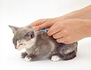 Vaccinating a kitten with cat flu