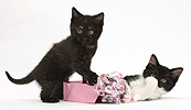 Kittens playing with birthday gift bag and wrapping paper
