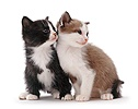 Black-and-white and brown-and-white kittens