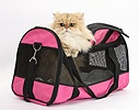 Golden Chinchilla Persian cat in a cat carrying bag