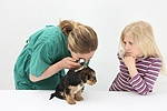 Vet using an otoscope to examine a Yorkie pup's ear