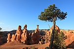 Hoodoos with balanced rocks and pine tree