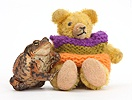 Common Toad and tiny teddy bear