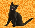 Black cat meowing