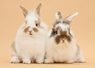 Young bunnies on beige background