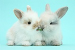 Cute baby bunnies on blue background