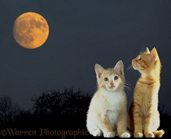 Two kittens under the moon