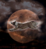 Ghost dog racing across the moon
