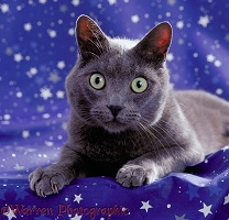 Cat with stars in its eyes