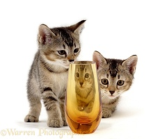 Kittens & orange glass
