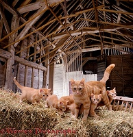 Barn cats in 3D 1 R