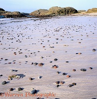 Pebbles on an Iona sandy beach