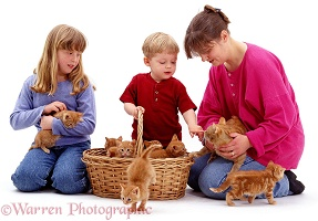 Family with kittens in a basket
