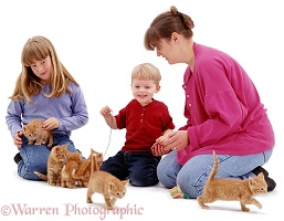 Family with six ginger kittens
