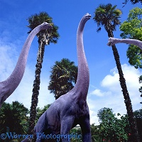 Brachiosaurus and palms 3D R