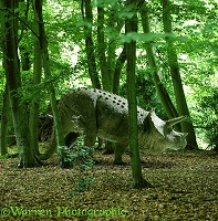 Triceratops in Beech wood 3D R