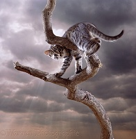 Cat up a tree with cloudy sky