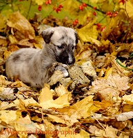 Puppy with a toad in leaves